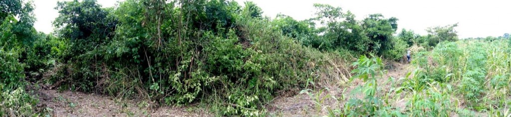 Vues de brousse