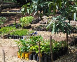 Songhaï, une ferme laboratoire