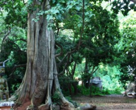Les forêts sacrées au Bénin
