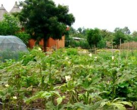Engrais et pesticides écologiques