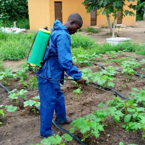 Pulvérisation pesticide