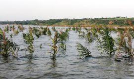 Pêche lac Ahémé