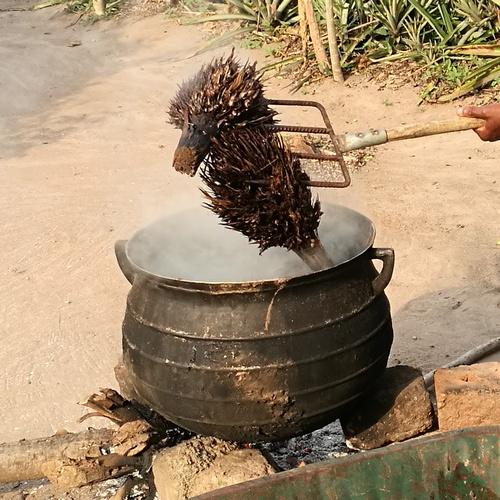 Cuisson rafle palmier