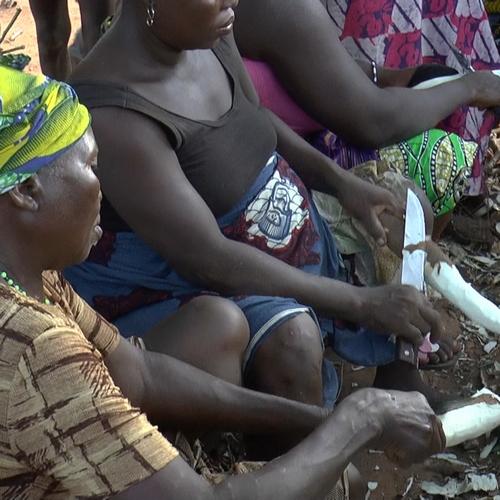 Nettoyage manioc